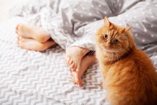 Beine von liebhabern unter decke und roter katze sitzen auf bett