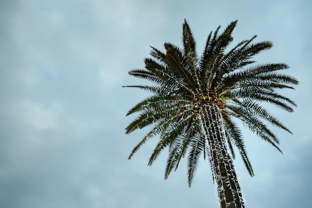 Beleuchtete palmen an einer straße