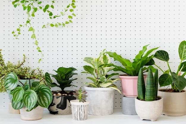 Beliebte topfpflanzen in weißem hintergrund
