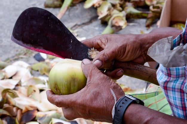 Bemannen sie hand auf schnitt die zuckerpalme