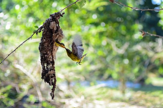 Bemuttern sie den vogel, der ihre jungen im nest mit schönem hintergrund der natur einzieht