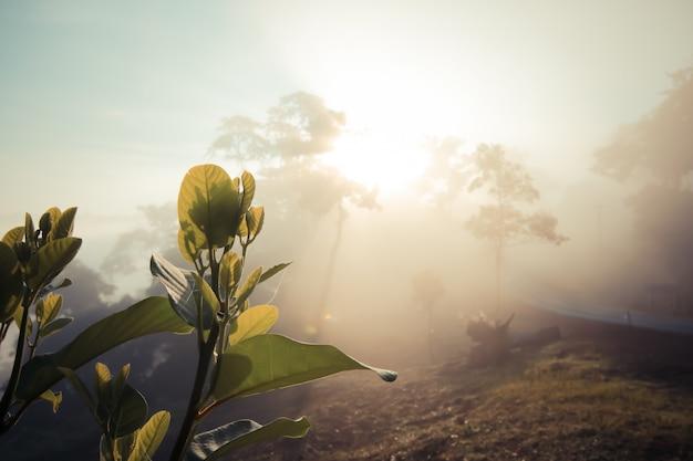 Beobachten sie das erste licht der morgensonne auf dem berg. fühlen sie sich erfrischt und stärken sie ihr leben.