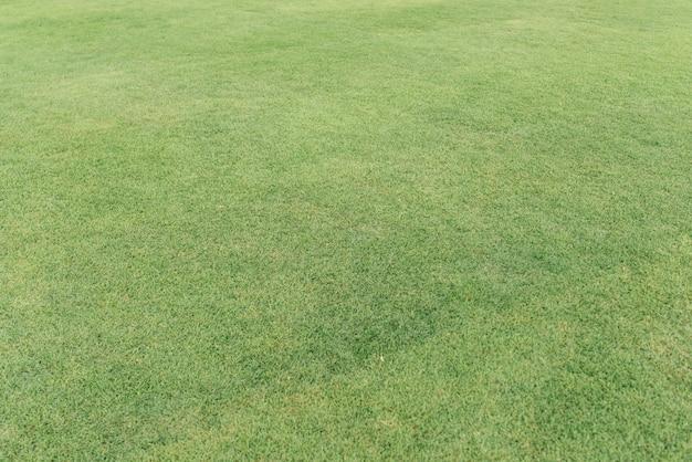 Bereich der frischen grünen grasbeschaffenheit. hintergrund.