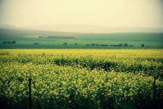 Bereich der gelben, auf dem land