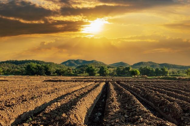 Bereiten sie die bepflanzung vor.die umwandlung von gemüsekulturen der landwirte mit sonnenstrahlen