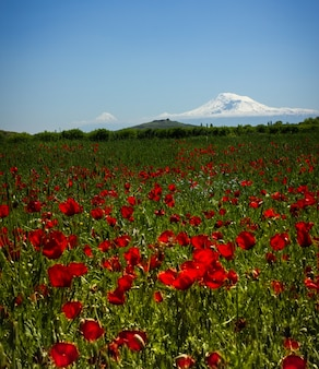 Berg ararat. schöne aussicht aus armenien