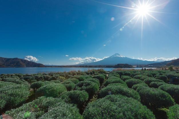 Berg fuji und see in japan mit feldbaum