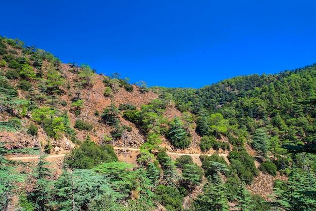 Berg- und kiefern im cedar valley in zypern gegen den blauen himmel