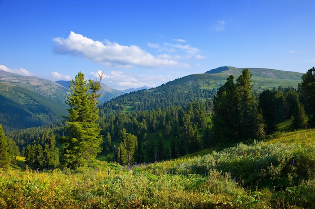 Berge landschaft mit zedernwald