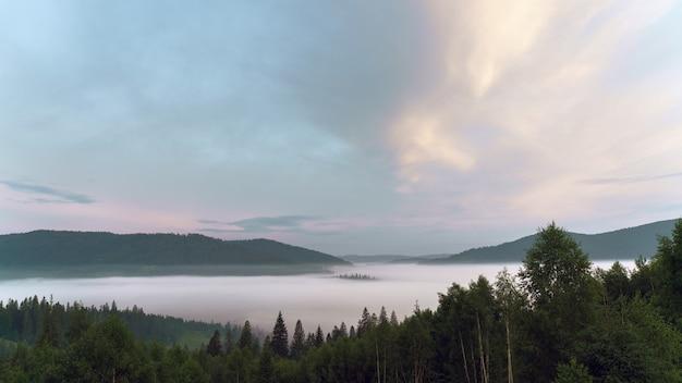 Berge über den wolken, die von kiefernwäldern auf karpaten bedeckt sind