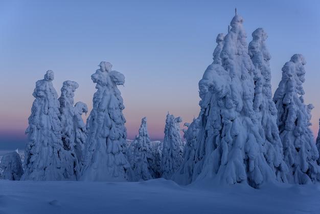 Berggipfel in der blauen stunde. berggipfel mit schneebedeckten bäumen.