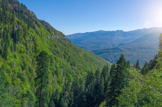 Berghänge mit dichtem mischwald in europa.