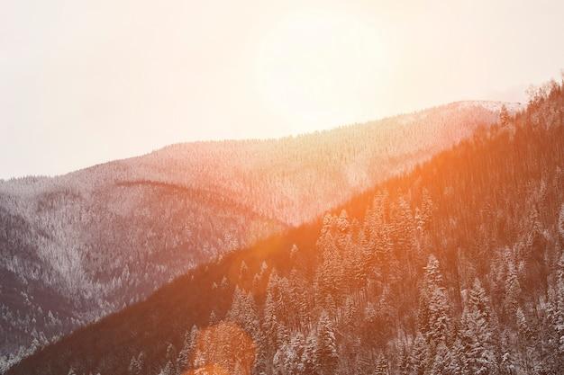 Berghänge mit dichtem schneebedeckten nadelwald. winterlandschaft