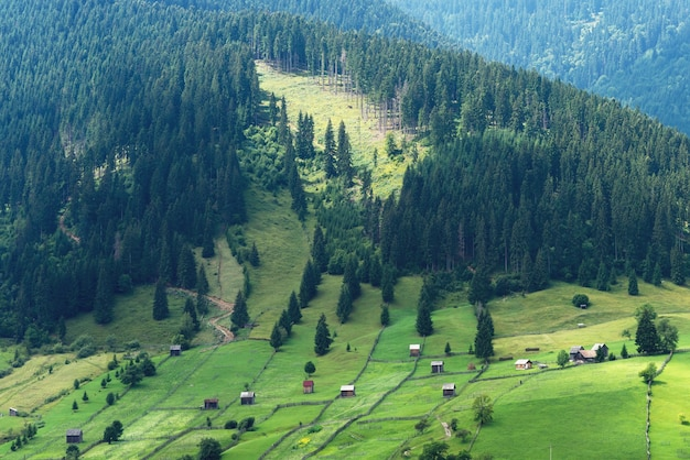 Berglandschaft in bukowina mit grünen feldern