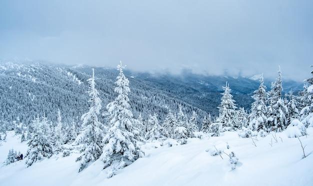 Berglandschaft mit gefrorenem kiefernwald unter tiefem schnee