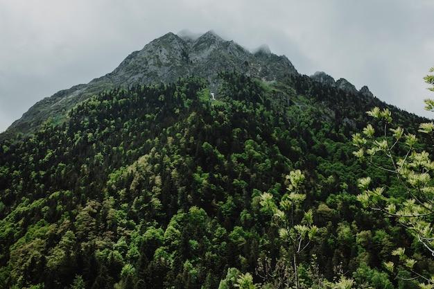 Berglandschaft mit grünen bäumen