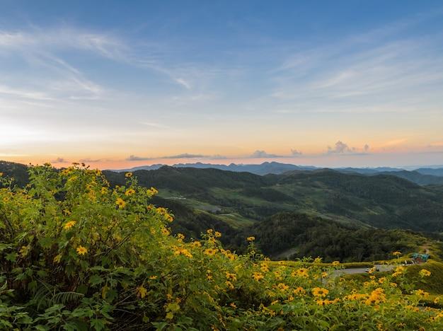 Bergsonnenaufganglandschaft mit mexikanischem sonnenblumenblühtal in meahongson, thailand