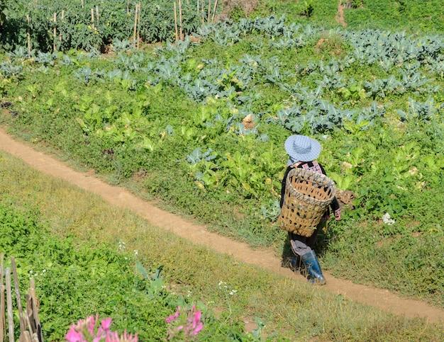 Bergstamm von hmong mit korb
