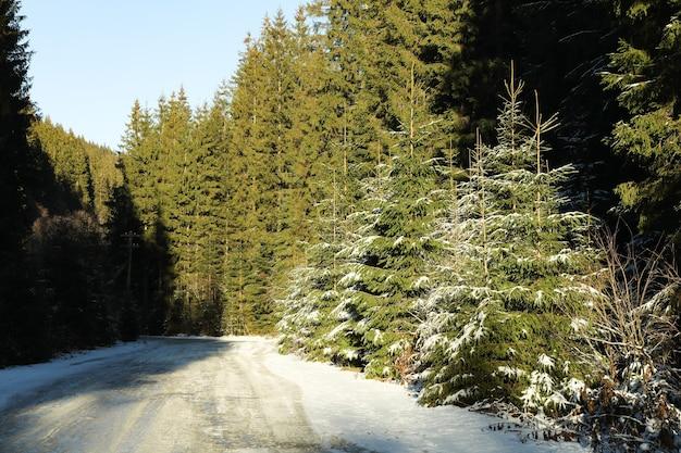 Bergstraße im winterfichtenwald am sonnigen tag
