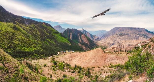 Bergtal mit einem hochfliegenden adler. hohe berge, eine komplexe berglandschaft, grüne, mit vegetation bedeckte hänge. panoramablick. dagestan.
