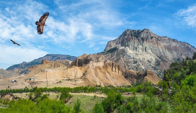 Bergtal mit hochfliegenden adlern. hohe berge über einem grünen tal vor blauem himmel. dagestan. panoramablick.