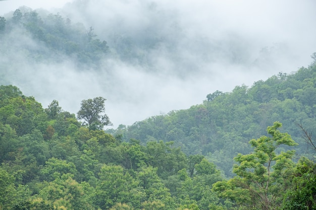 Bergwald im nebel nach regen am morgen frisches gefühl frisch und kühl