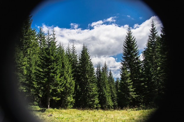 Bergwaldblick durch fernglas