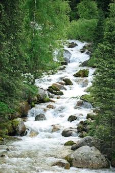 Bergwaldfluss mit steinen und grünpflanzen