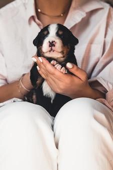 Berner sennenhundewelpe in weiblichen händen