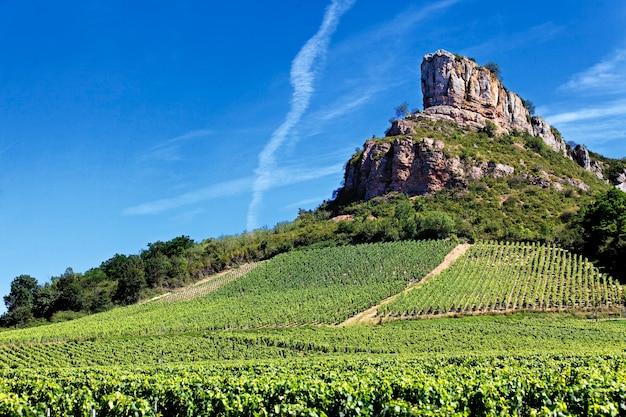 Berühmter solutre rock mit weinbergen, burgund, frankreich
