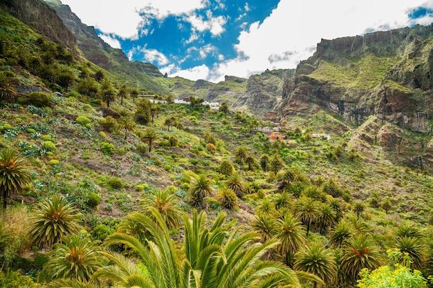 Berühmtes masca-tal mit vielen palmen in teneriffa, kanarische inseln, spanien