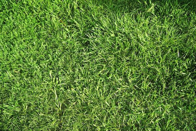 Beschaffen sie grünes saftiges frisches gras als frau an einem sonnigen tag