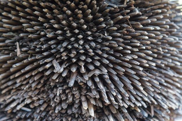 Beschaffenheit der palmebarke. schönes rindenmuster. nahansicht.