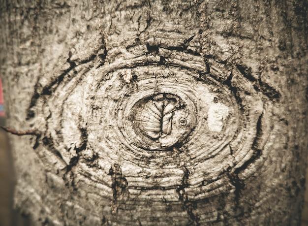 Beschaffenheit des alten holzes mit der barke, die wie das augenmonster aussieht.