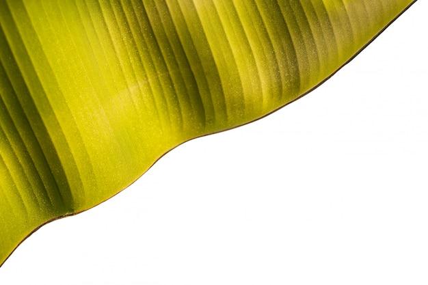 Beschaffenheit des frischen grünen bananenblattes lokalisiert auf weiß. mit beschneidungspfad gespeichert