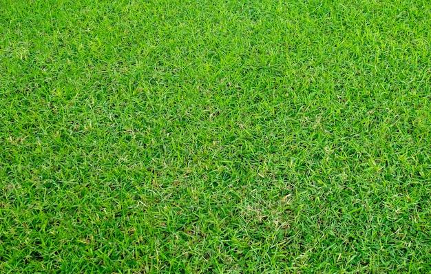 Beschaffenheit des grünen grases für hintergrund. grünes rasenmuster und beschaffenheitshintergrund.