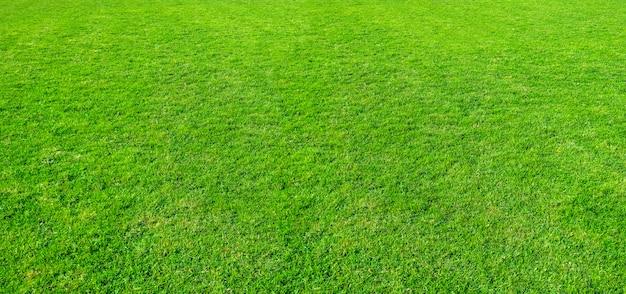 Beschaffenheit des grünen grases von einem feld.