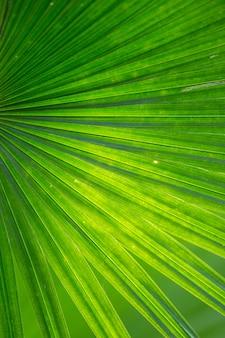 Beschaffenheit des grünen palmblattes