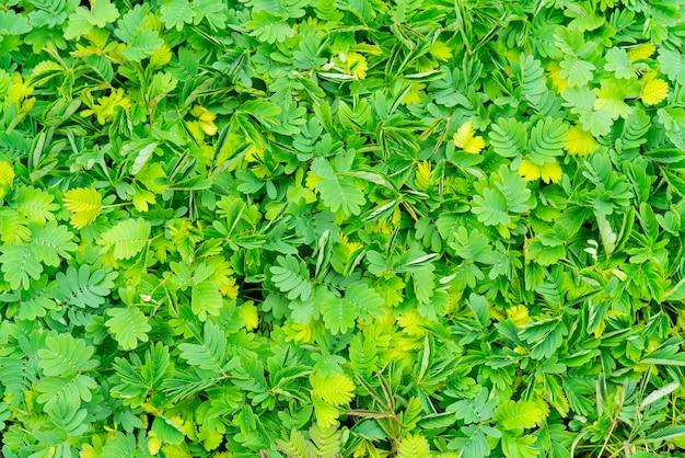 Beschaffenheit des grünpflanzehintergrundes