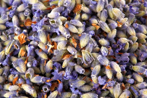 Beschaffenheit von blumen des lavendels