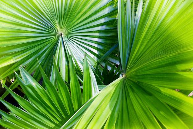 Beschaffenheits-grünes palmblatt und schatten, abstrakter hintergrund