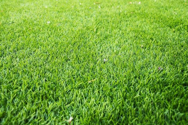 Beschaffenheitshintergrund des grünen grases