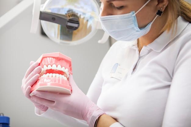 Beschnittener schuss des weiblichen zahnarztes, der medizinische maske hält, die zahnmodell hält