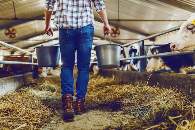 Beschnittenes bild des hübschen kaukasischen bauern, der eimer mit milch hält, während im stall geht.