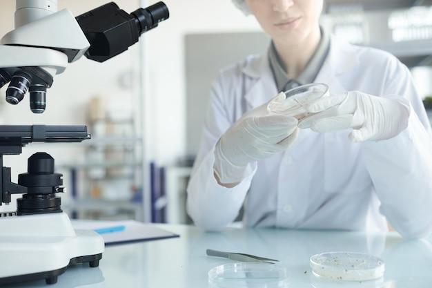 Beschnittenes porträt der jungen wissenschaftlerin, die petrischale hält, während pflanzenproben im biotechnologielabor, kopienraum studiert