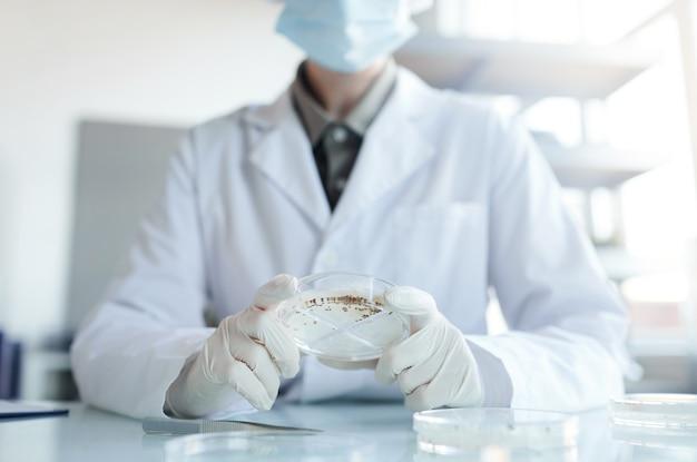 Beschnittenes porträt einer nicht wiedererkennbaren wissenschaftlerin, die eine petrischale hält, während sie pflanzensamenproben im biotechnologielabor studiert, raum kopieren