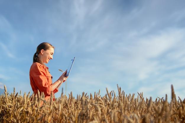 Besitzerfarm mit touchpad zur überprüfung der weizenqualität auf dem feld. agronom, der im weizenfeld steht und eine tablette verwendet