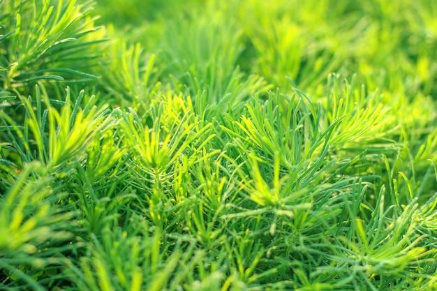 Beständiges gras der gartendekoration im sonnenlicht