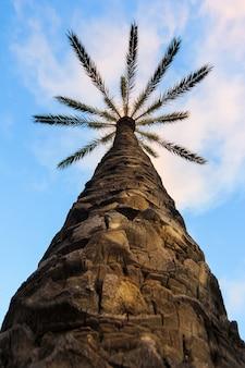 Betrachten der schattenbilder der palme gegen den blauen himmel während eines tropischen sonnenuntergangs