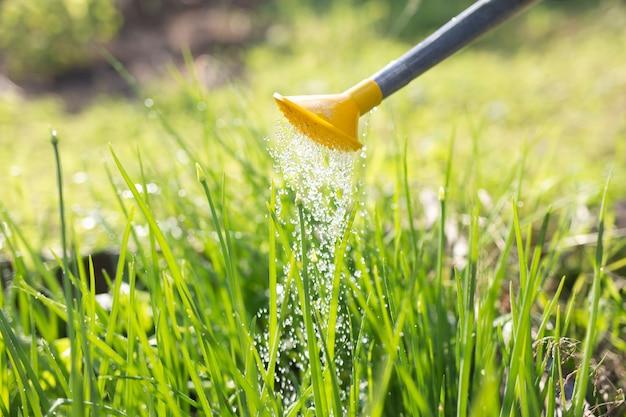 Bewässerung. bewässerungsgarten-gemüse-zwiebel-sommer